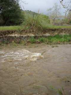 Creek2009-02-16_2
