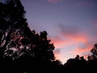 dawn2009-01-29