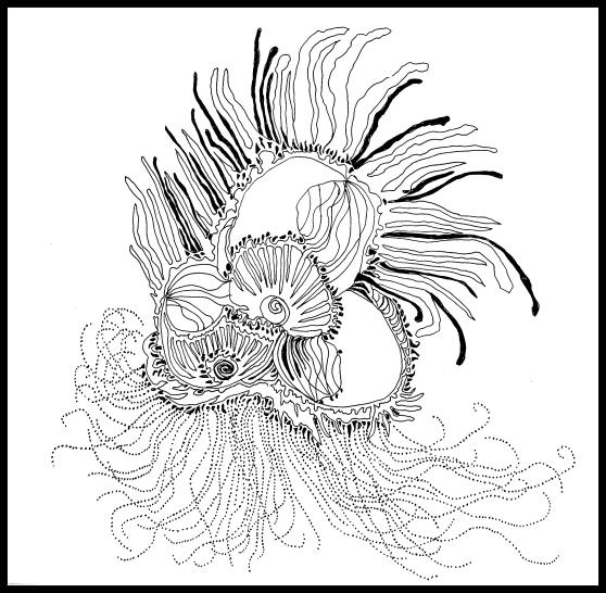 Deb-Haugen-protea